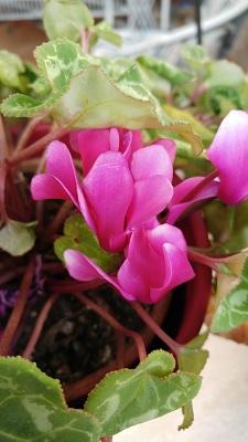 LG G5 foto macro fiore colori naturali