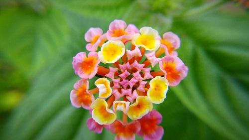 scatto prova macro fiore