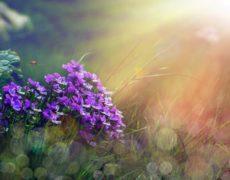 Immagini di buongiorno natura